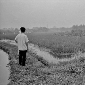 Vol.750 こがねい水田跡碑物語(1) 昭和40年代前期の野川沿いの水田