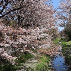 Vol. 1078      野川沿いを散歩〜やまべ橋付近から鞍尾根橋・貫井神社へ〜