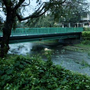 Vol.1267 【台風19号】野川 中前橋付近の様子