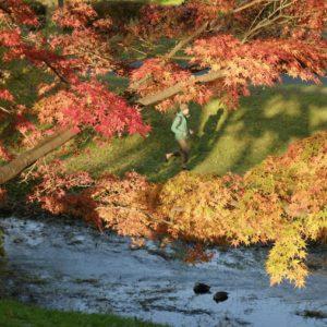 Vol.1336 夕陽に映える都立武蔵野公園の紅葉