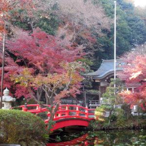 Vol.1344 貫井神社の紅葉