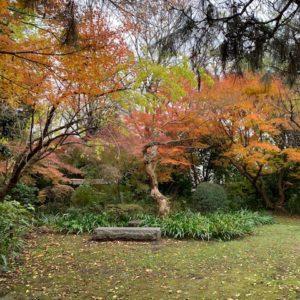 VOL.1350 紅葉の穴場 はけの森緑地2