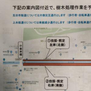 Vol.1390 陣屋橋から小金井橋にかけての整備工事