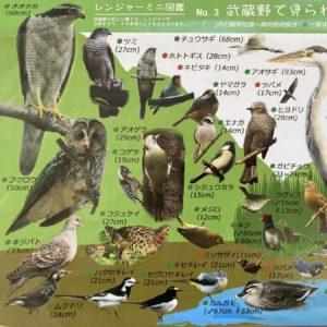 Vol.1792 冬も楽しい野川 おさんぽ&野鳥